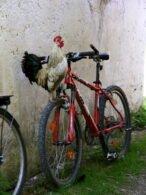 birdonbike